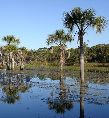 Uma vereda conservada. Água durante os períodos de seca